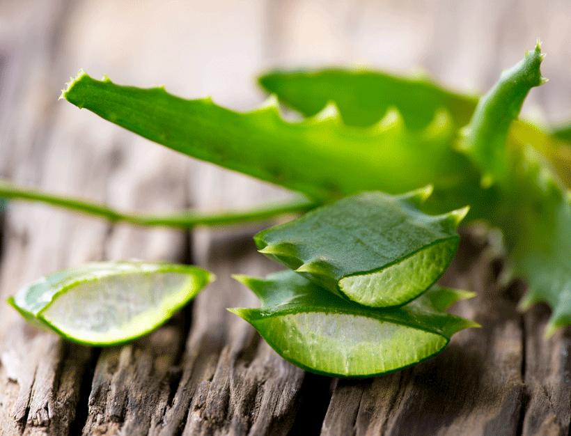 Aloe Vera : Tout savoir sur les bienfaits extraordinaires de l'Aloe Vera !