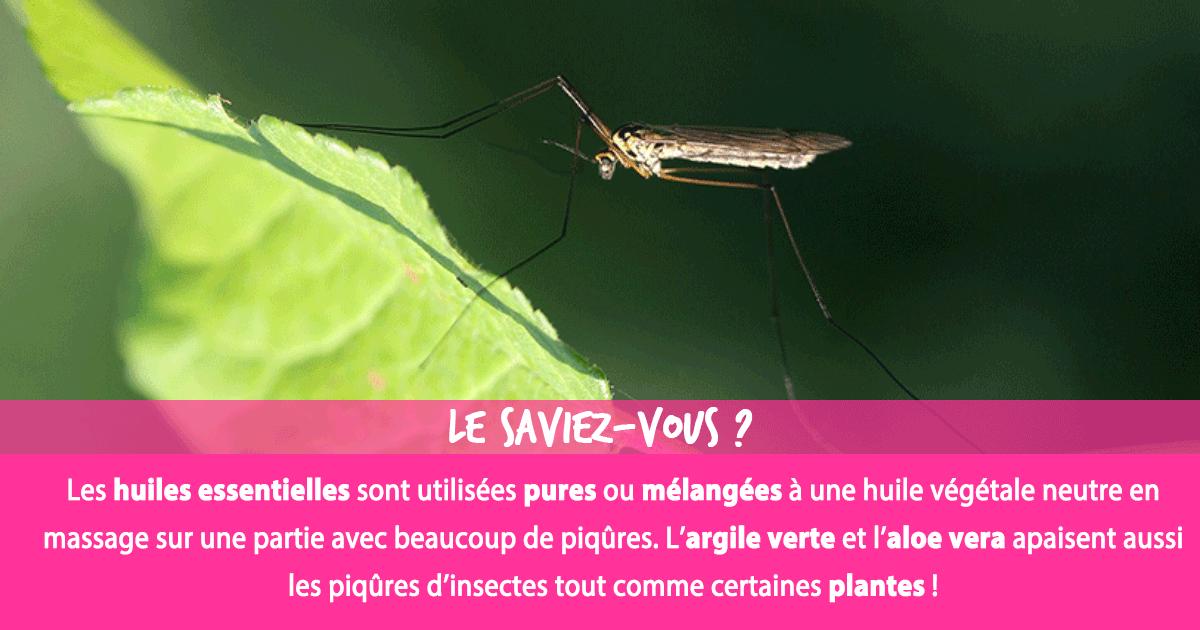 Piqûres d'insectes : Quels soins et remèdes pour les piqûres d'insectes ?