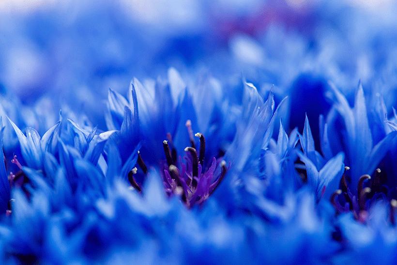 eau-florale-5