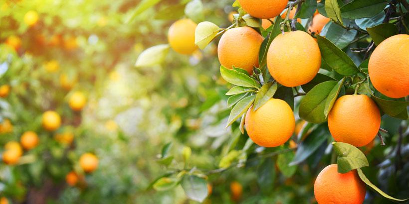 La Vitamine C : un rayon de soleil pour votre corps et votre peau !