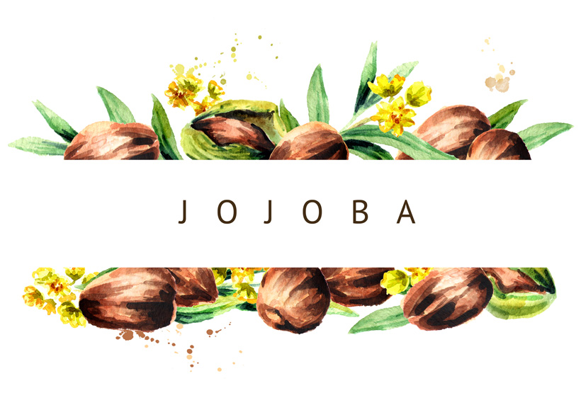 L'huile de jojoba : Tout savoir sur les nombreux bienfaits de l'huile de jojoba !